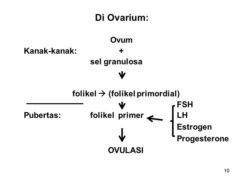 Di Ovarium: Ovum Kanak-kanak: + sel granulosa folikel  (folikel primordial) FSH Pubertas: folikel primer LH Estrogen Progesterone OVULASI
