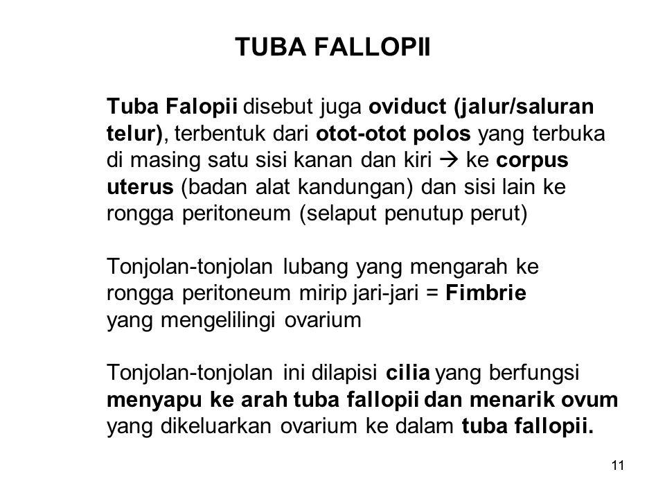 TUBA FALLOPII Tuba Falopii disebut juga oviduct (jalur/saluran