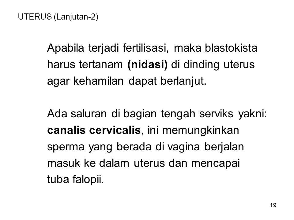 Apabila terjadi fertilisasi, maka blastokista