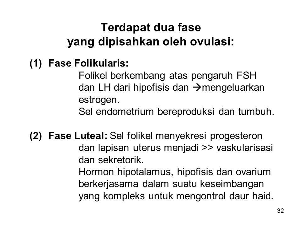 Terdapat dua fase yang dipisahkan oleh ovulasi: