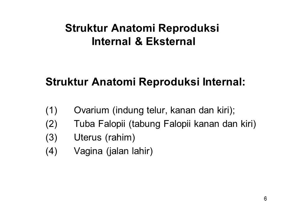 Struktur Anatomi Reproduksi Internal & Eksternal