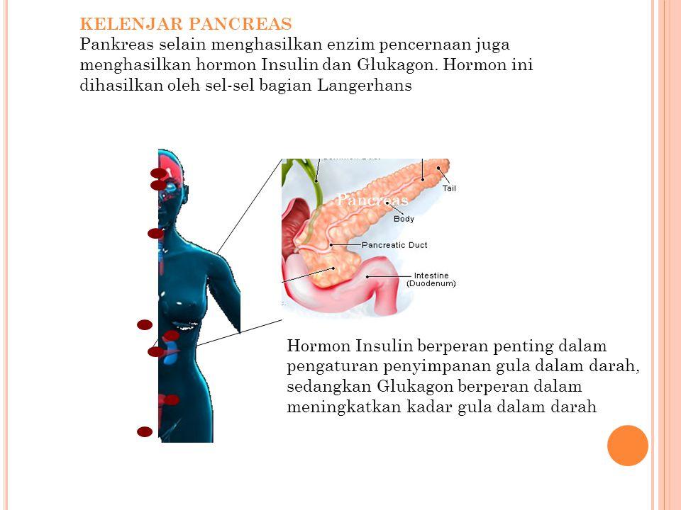 KELENJAR PANCREAS