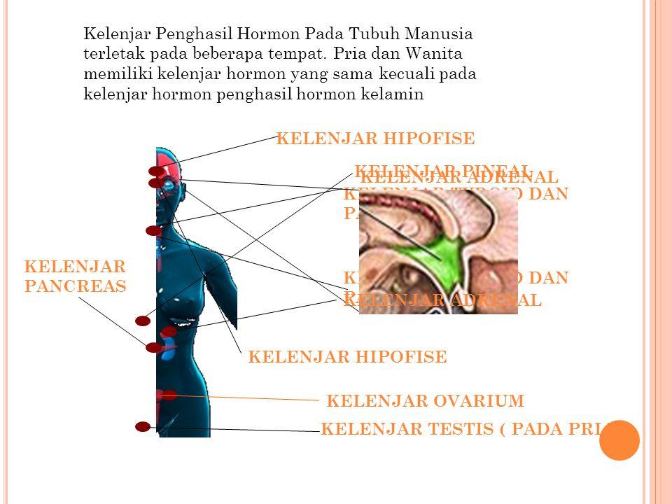 Kelenjar Penghasil Hormon Pada Tubuh Manusia terletak pada beberapa tempat. Pria dan Wanita memiliki kelenjar hormon yang sama kecuali pada kelenjar hormon penghasil hormon kelamin