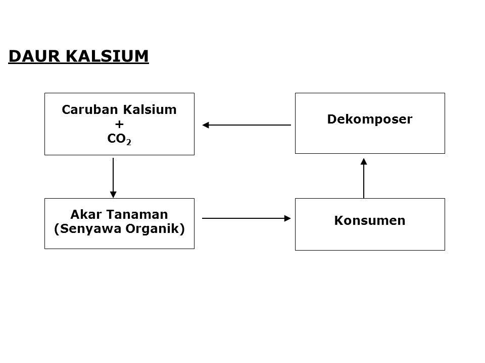 DAUR KALSIUM Caruban Kalsium Dekomposer + CO2 Akar Tanaman Konsumen