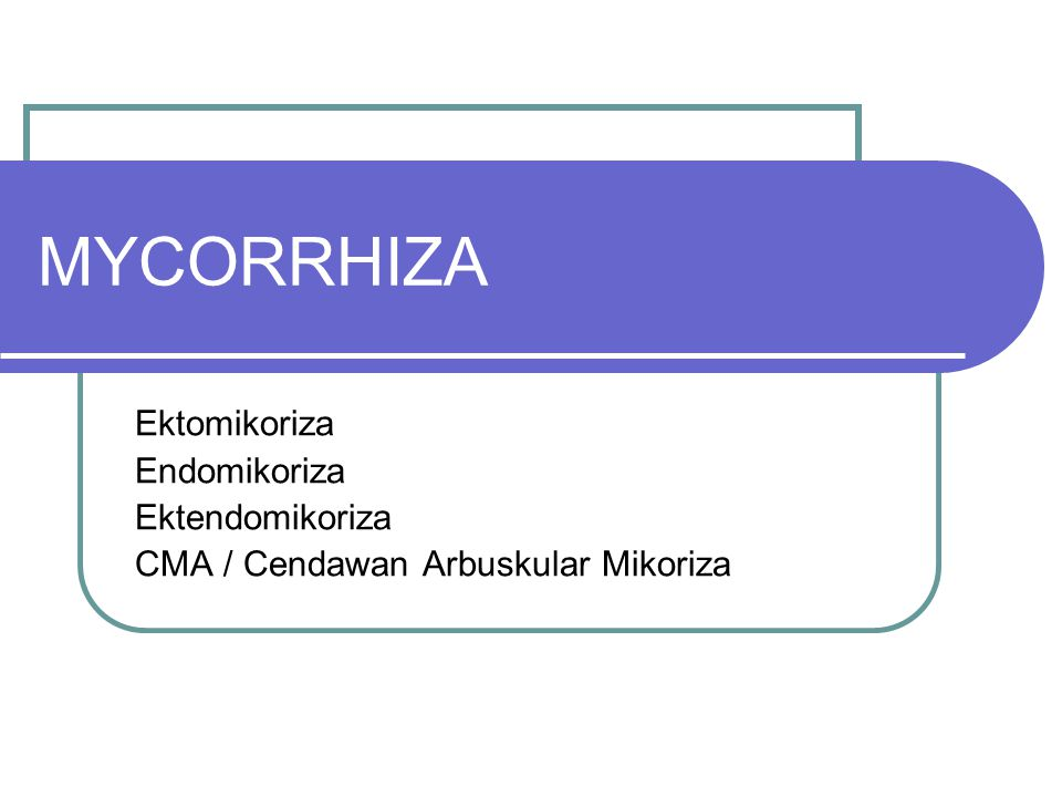 MYCORRHIZA Ektomikoriza Endomikoriza Ektendomikoriza