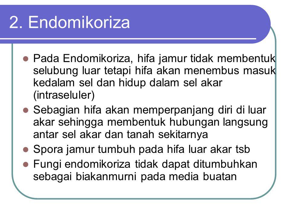 2. Endomikoriza