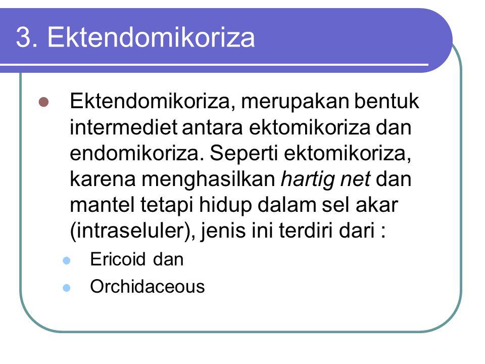 3. Ektendomikoriza