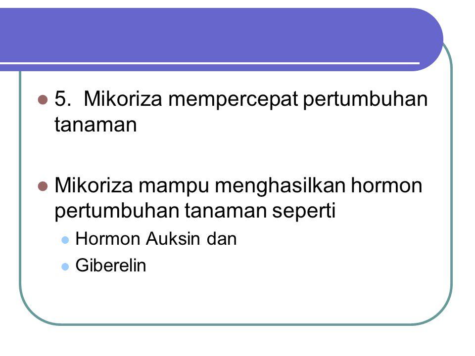 5. Mikoriza mempercepat pertumbuhan tanaman