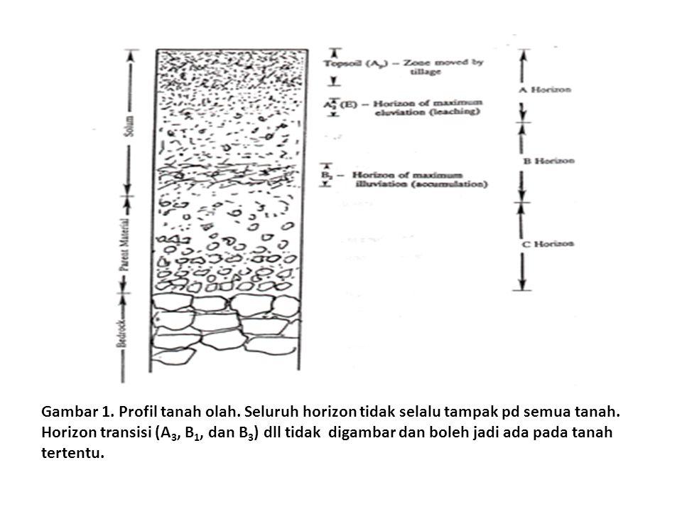 Gambar 1. Profil tanah olah