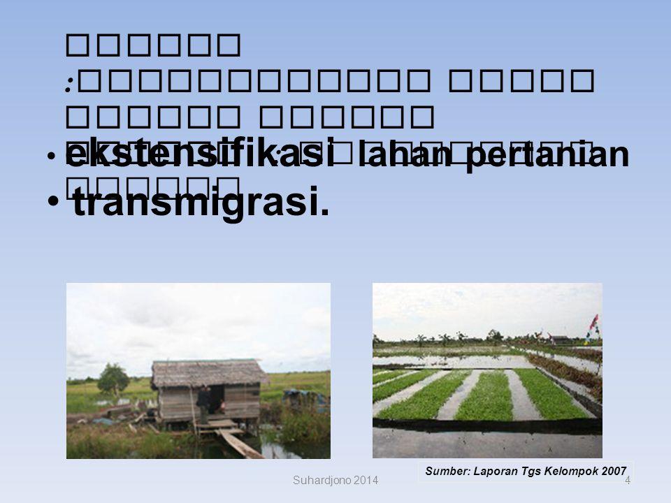 Proyek :Pengembangan Lahan Gambut Sejuta Hektar : Kalimantan Tengah