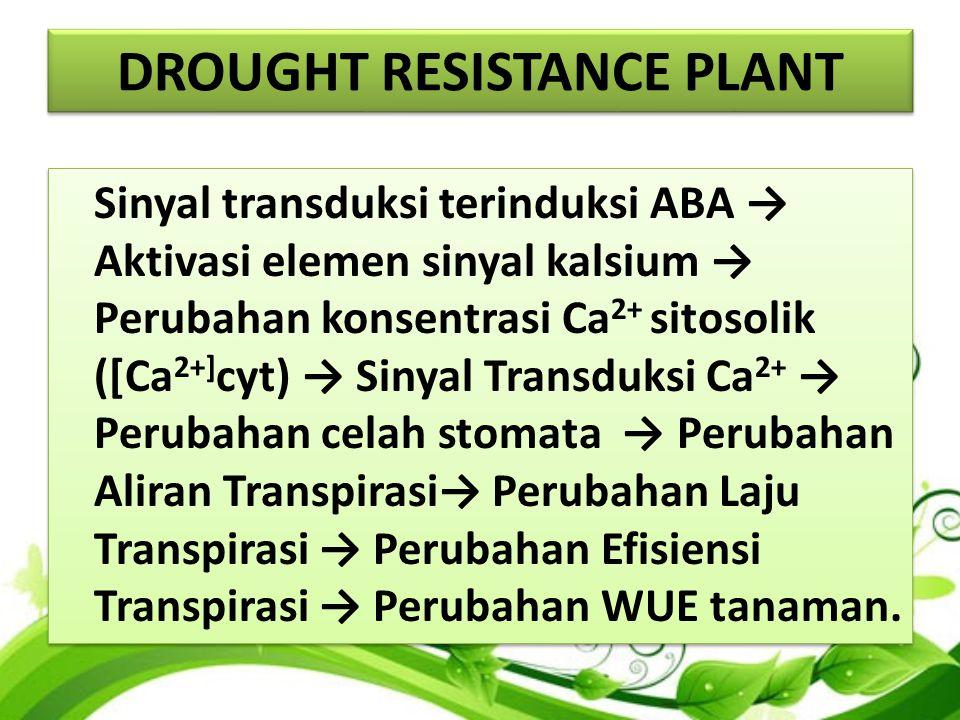 DROUGHT RESISTANCE PLANT