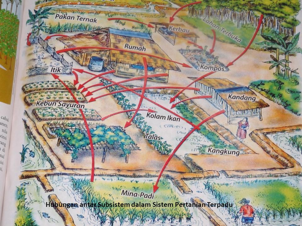 Hubungan antar Subsistem dalam Sistem Pertanian Terpadu
