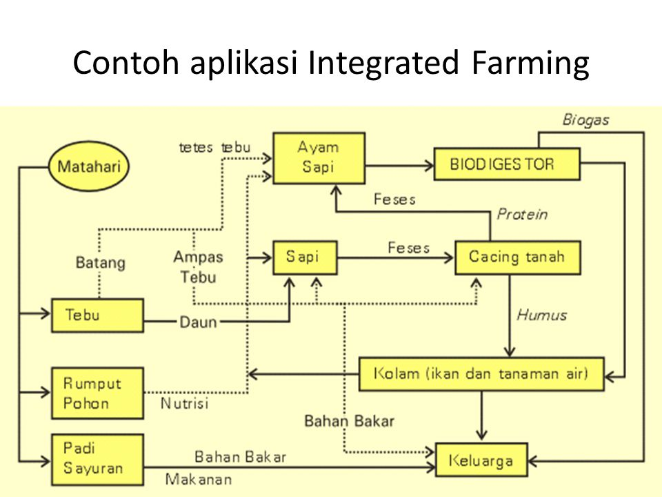 Contoh aplikasi Integrated Farming