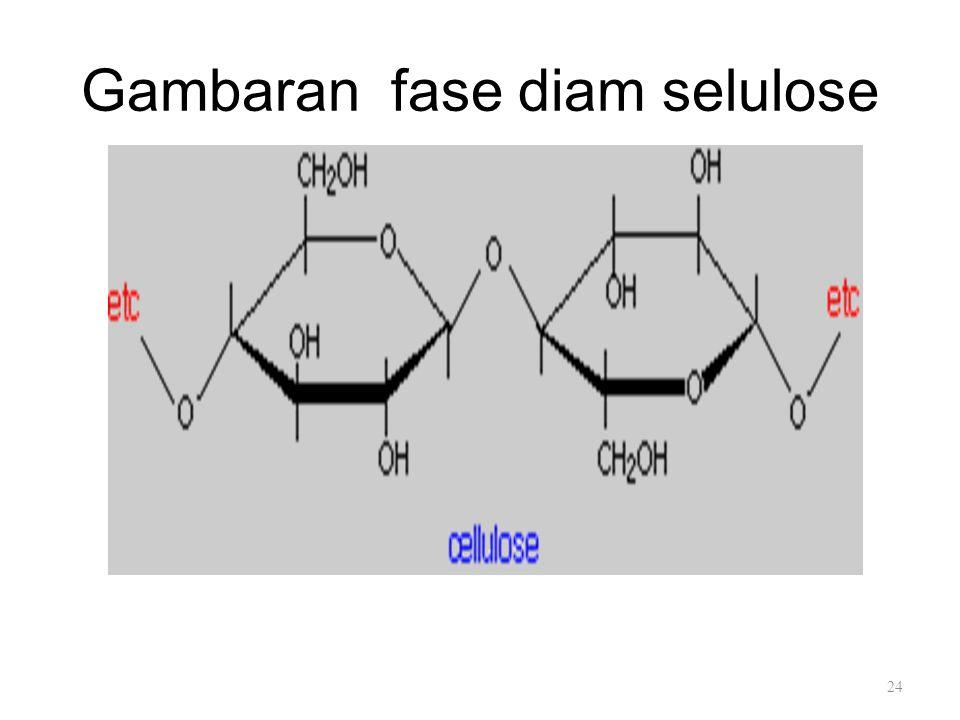 Gambaran fase diam selulose