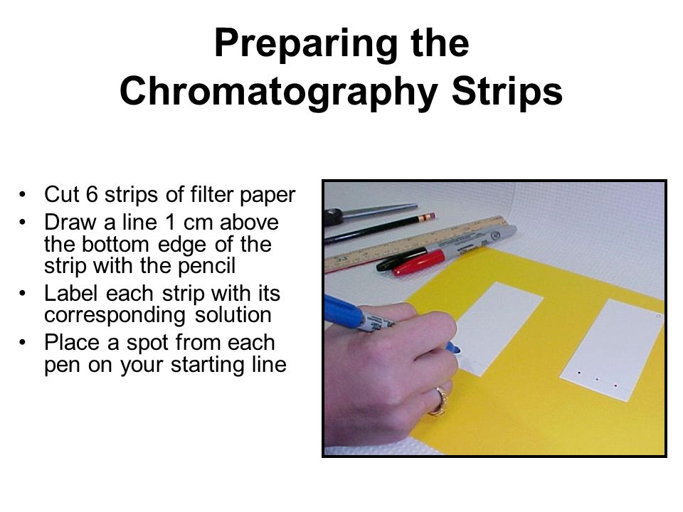 Preparing the Chromatography Strips
