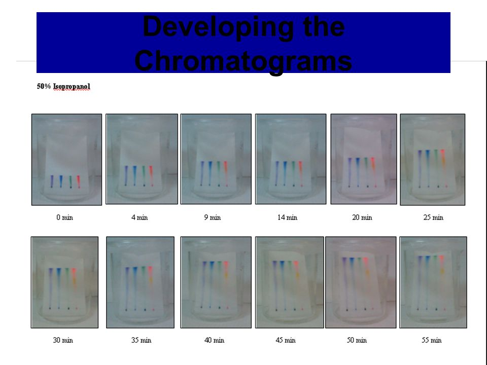 Developing the Chromatograms