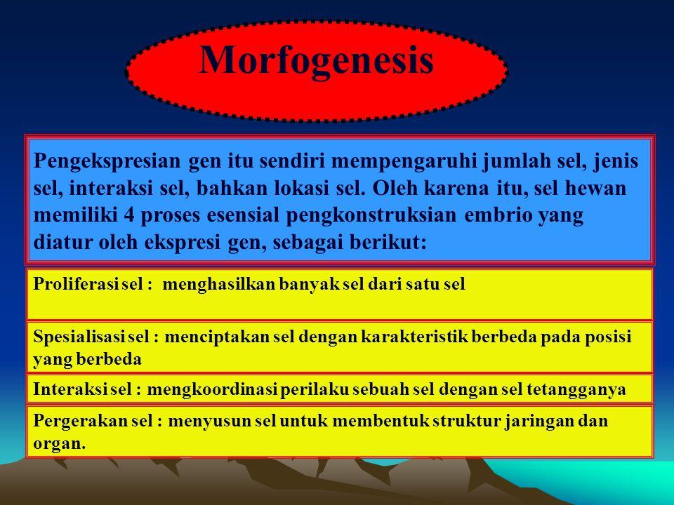 Morfogenesis
