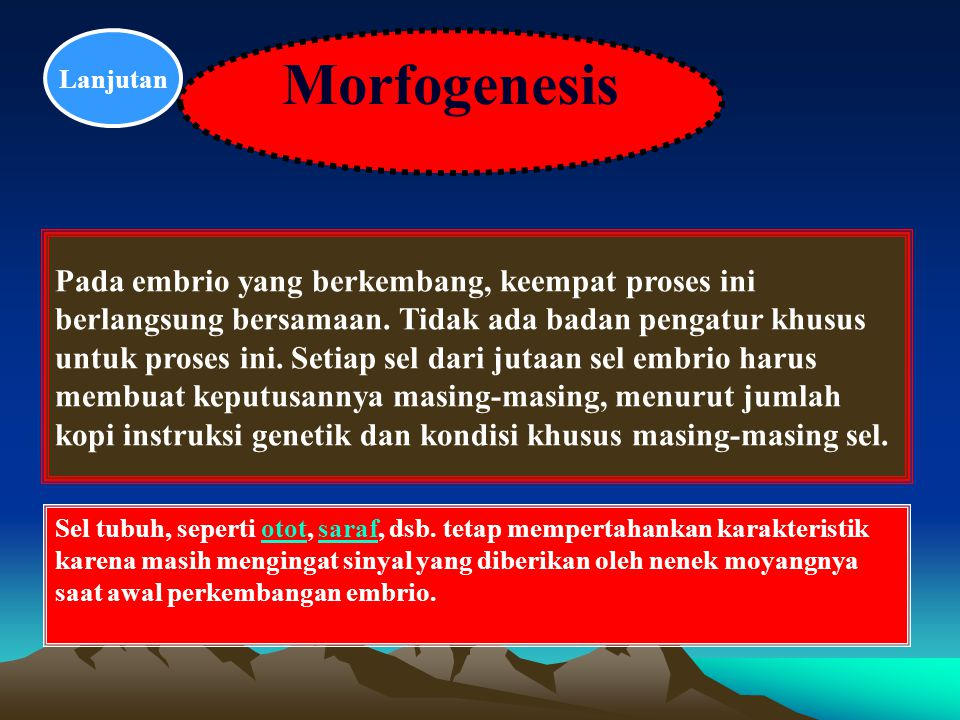 Lanjutan Morfogenesis.