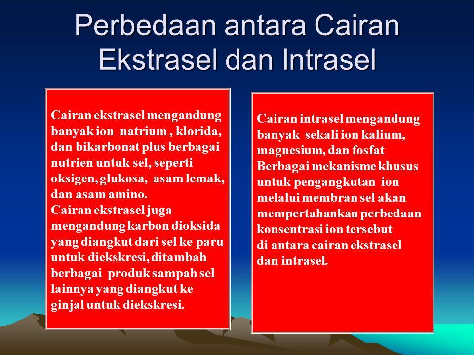 Perbedaan antara Cairan Ekstrasel dan Intrasel