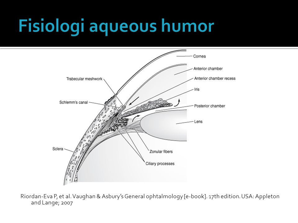 Fisiologi aqueous humor