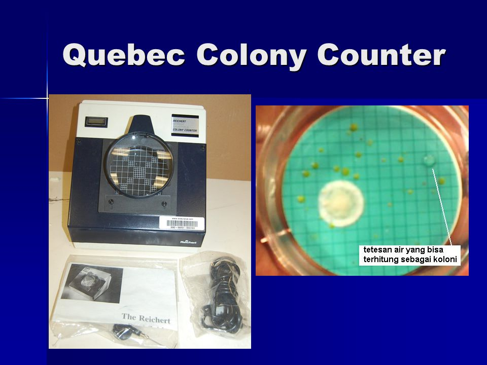 Quebec Colony Counter