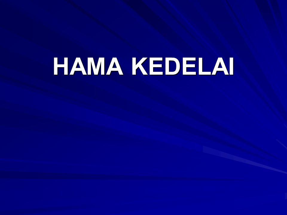 HAMA KEDELAI
