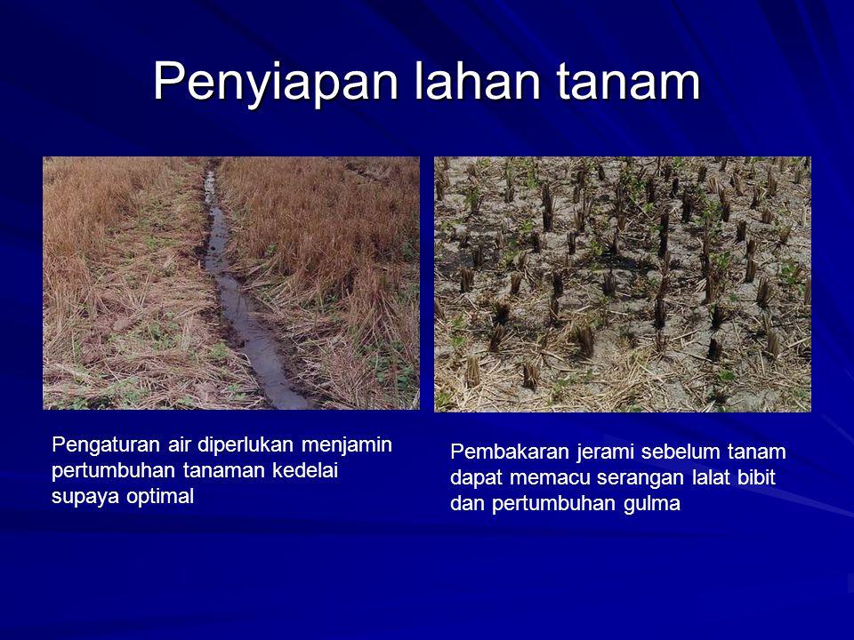 Penyiapan lahan tanam Pengaturan air diperlukan menjamin pertumbuhan tanaman kedelai supaya optimal.