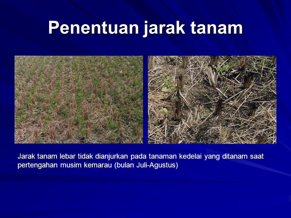 Penentuan jarak tanam Jarak tanam lebar tidak dianjurkan pada tanaman kedelai yang ditanam saat pertengahan musim kemarau (bulan Juli-Agustus)