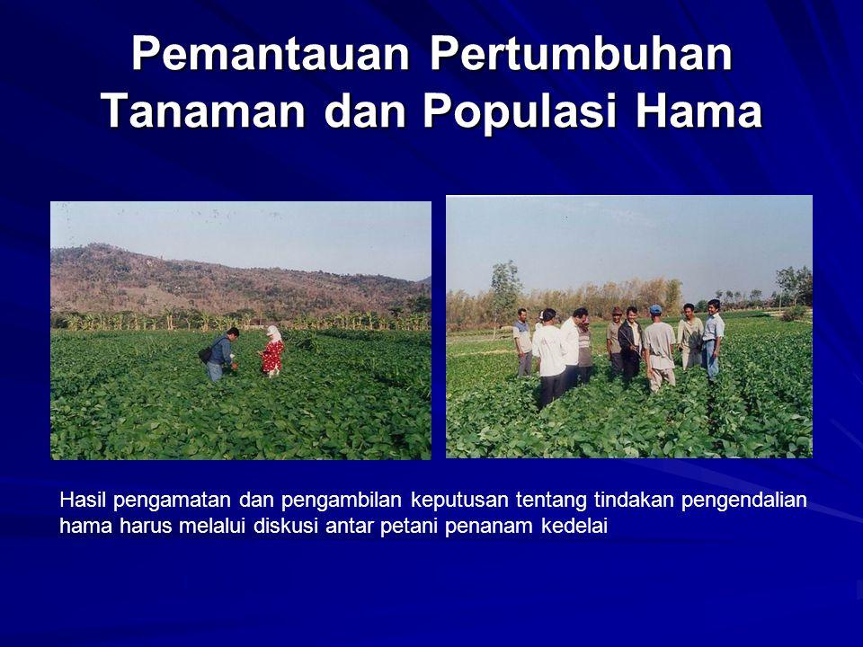 Pemantauan Pertumbuhan Tanaman dan Populasi Hama