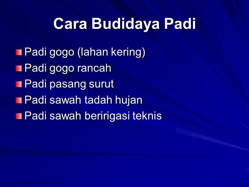 Cara Budidaya Padi Padi gogo (lahan kering) Padi gogo rancah
