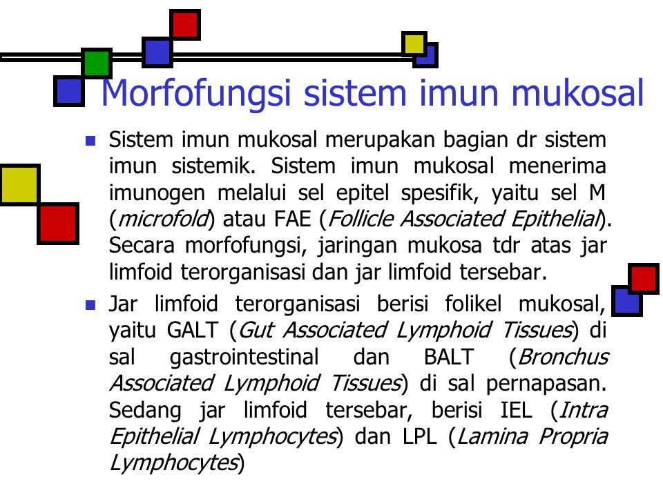 Morfofungsi sistem imun mukosal