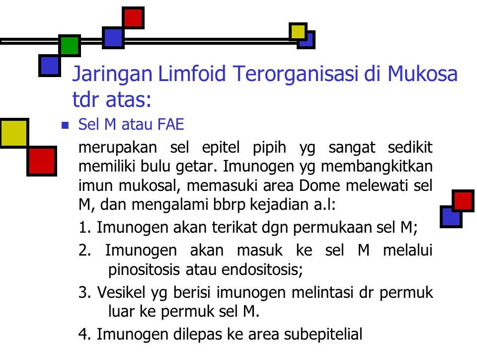 Jaringan Limfoid Terorganisasi di Mukosa tdr atas: