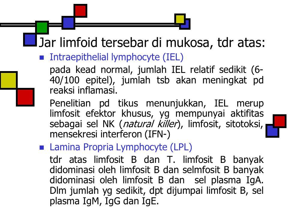 Jar limfoid tersebar di mukosa, tdr atas: