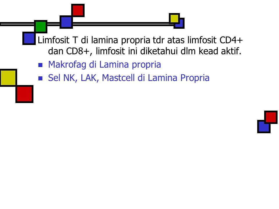 Limfosit T di lamina propria tdr atas limfosit CD4+ dan CD8+, limfosit ini diketahui dlm kead aktif.