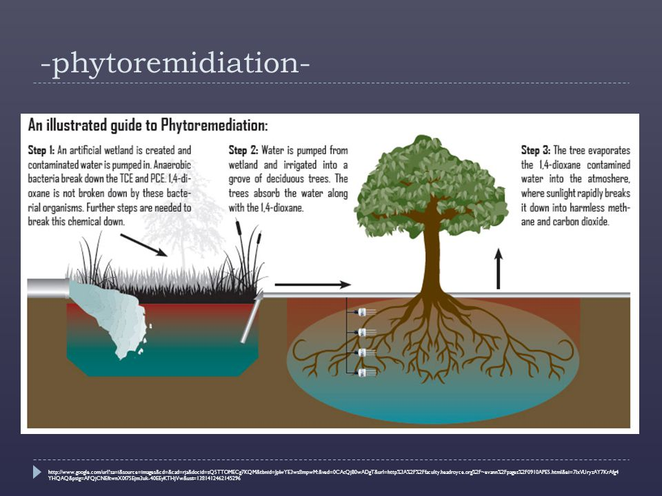 -phytoremidiation- The process by which inorganic and organic pollutants are removed by plants and microorganisms associated with those plants.