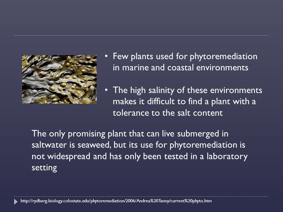 Few plants used for phytoremediation in marine and coastal environments