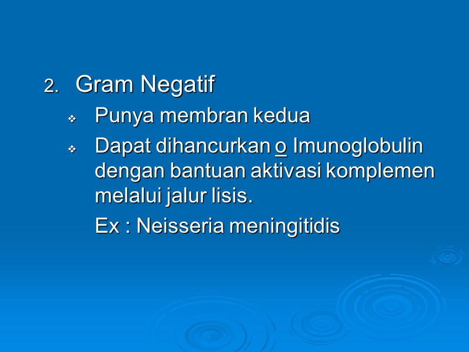 Gram Negatif Punya membran kedua