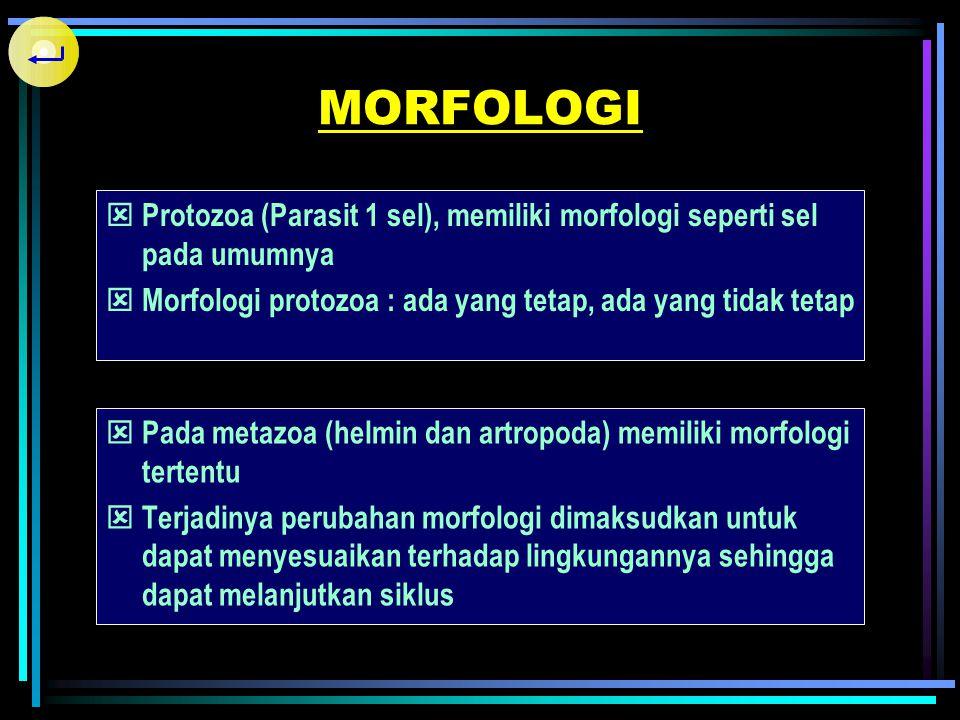 MORFOLOGI Protozoa (Parasit 1 sel), memiliki morfologi seperti sel pada umumnya. Morfologi protozoa : ada yang tetap, ada yang tidak tetap.