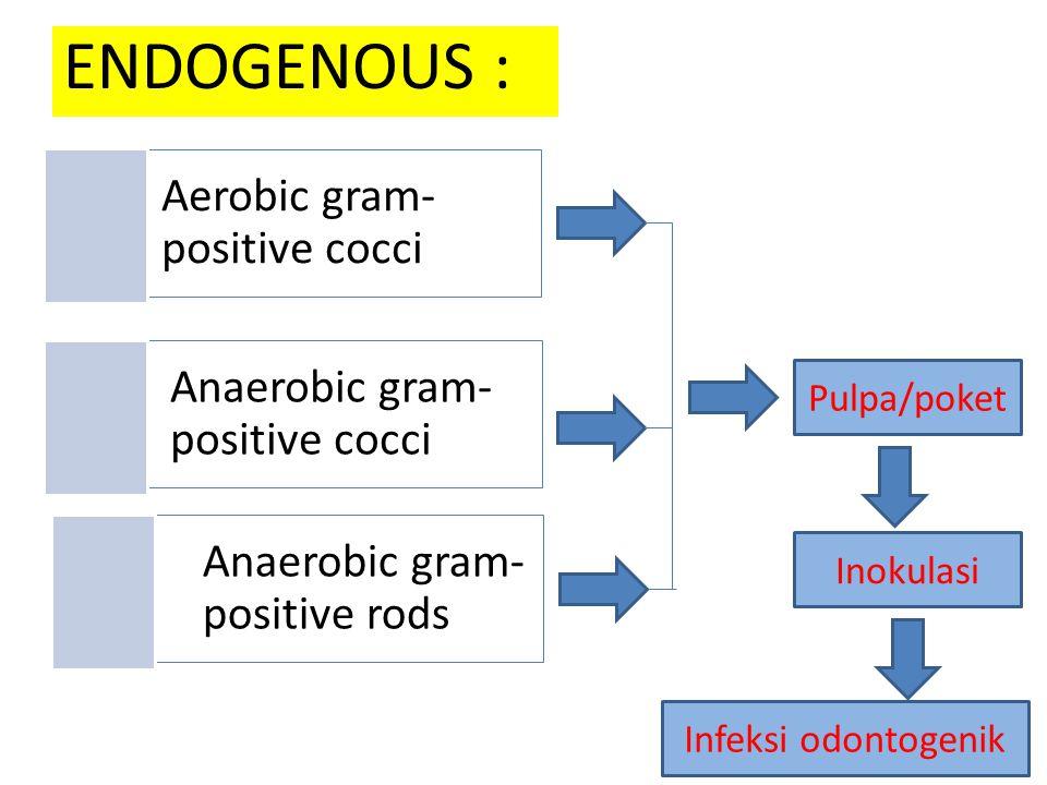 ENDOGENOUS : Aerobic gram-positive cocci Anaerobic gram-positive cocci