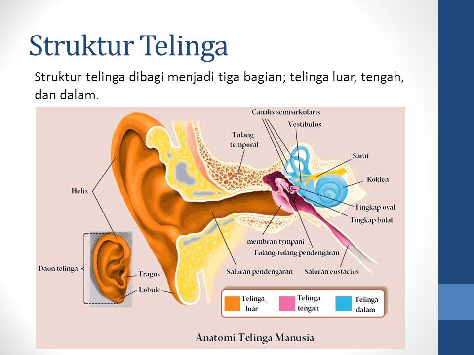 Struktur Telinga Struktur telinga dibagi menjadi tiga bagian; telinga luar, tengah, dan dalam.
