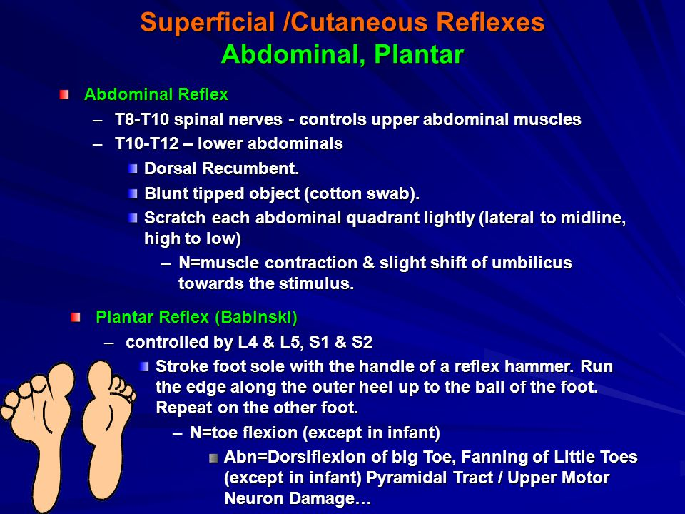 Superficial /Cutaneous Reflexes Abdominal, Plantar