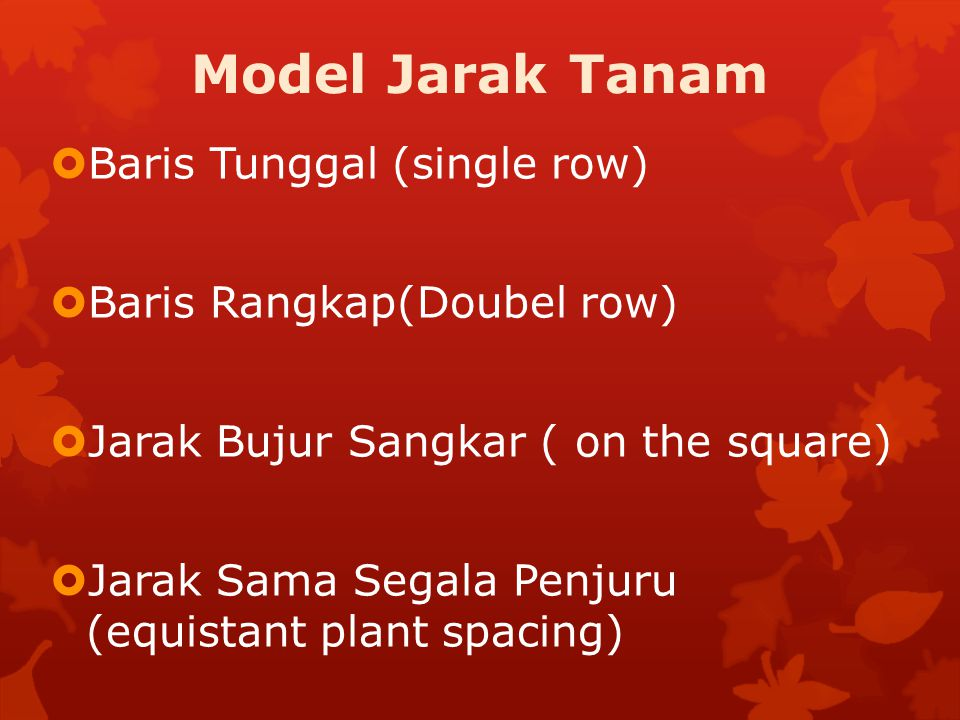 Model Jarak Tanam Baris Tunggal (single row) Baris Rangkap(Doubel row)