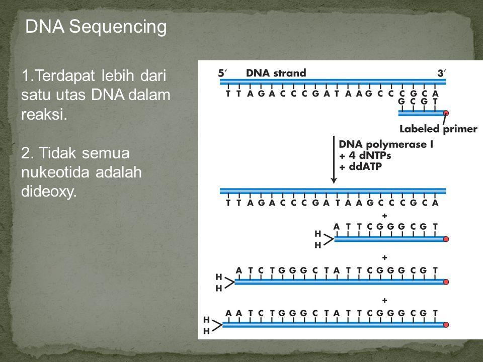 DNA Sequencing 1.Terdapat lebih dari satu utas DNA dalam reaksi.