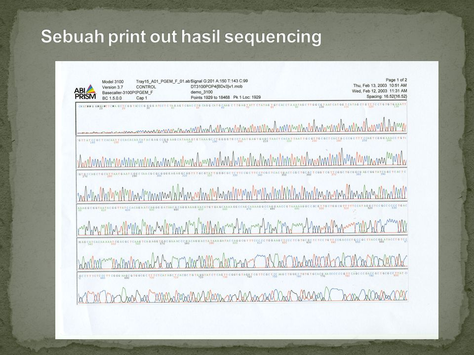Sebuah print out hasil sequencing