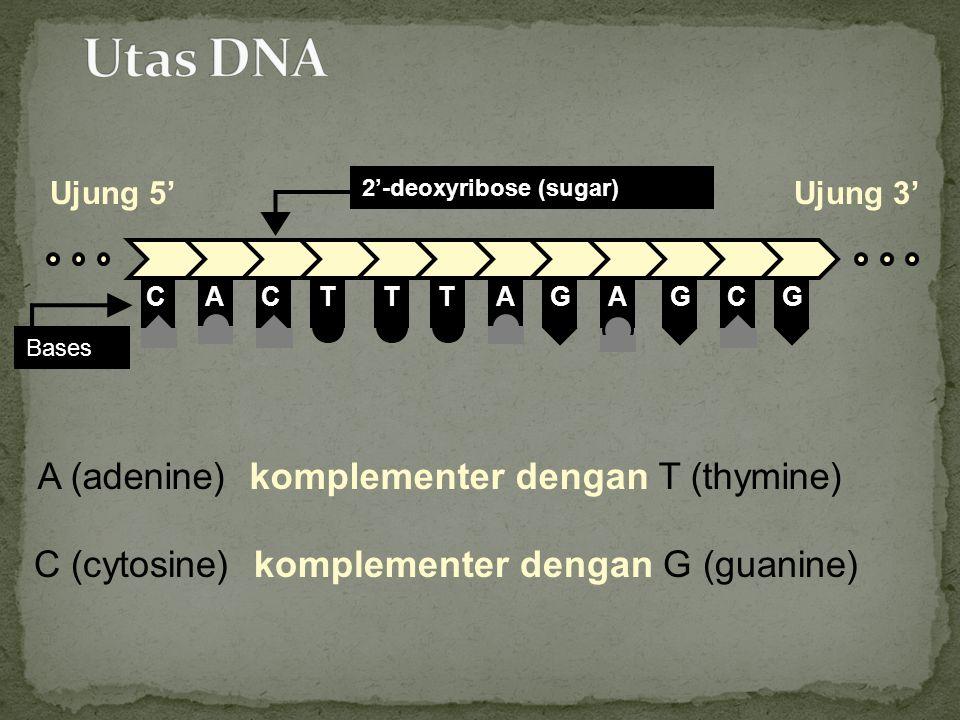 Utas DNA A (adenine) komplementer dengan T (thymine)