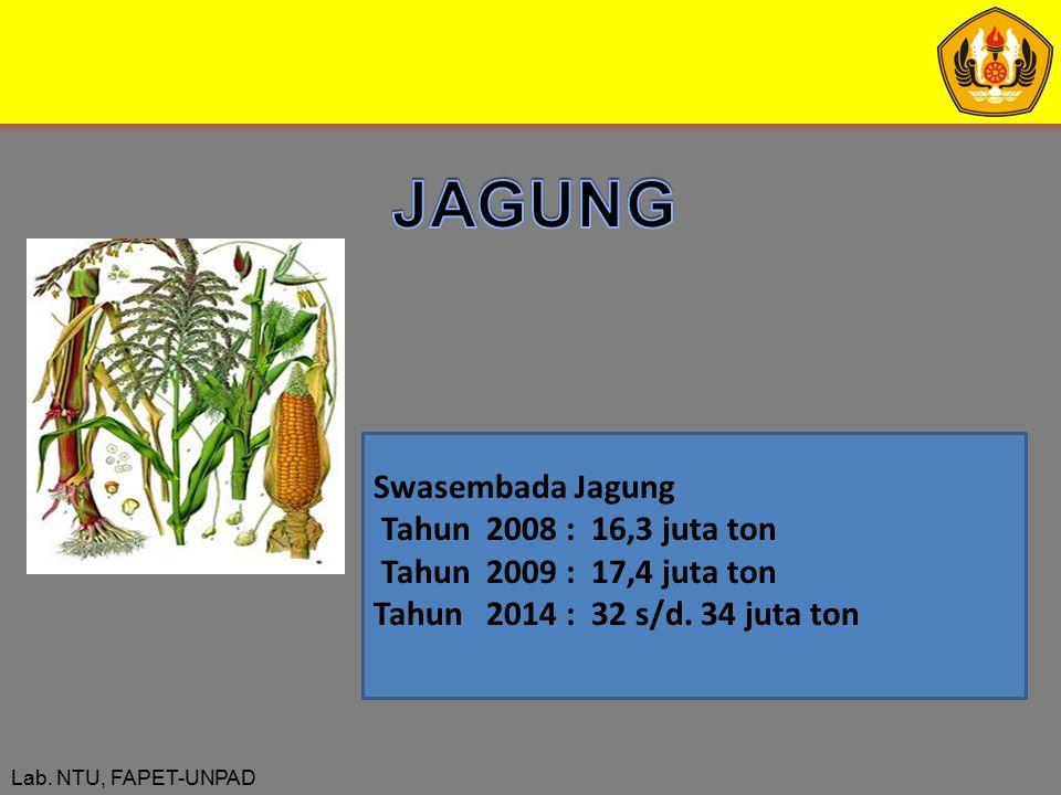 JAGUNG Swasembada Jagung Tahun 2008 : 16,3 juta ton