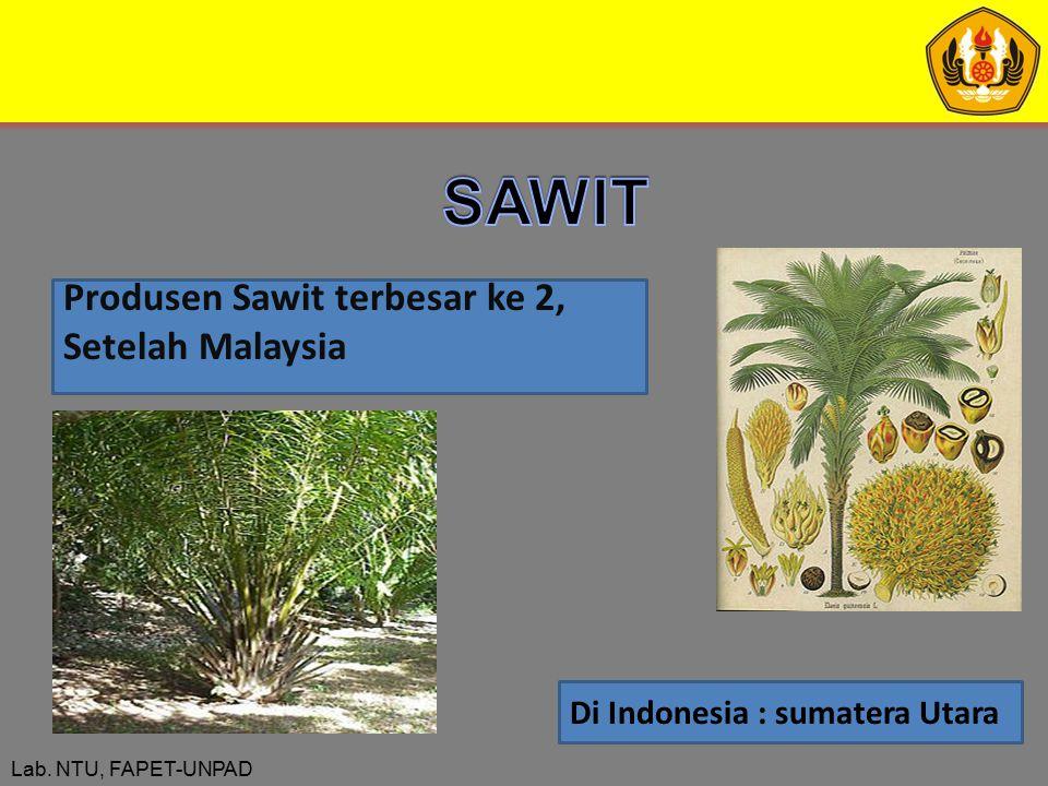 SAWIT Produsen Sawit terbesar ke 2, Setelah Malaysia
