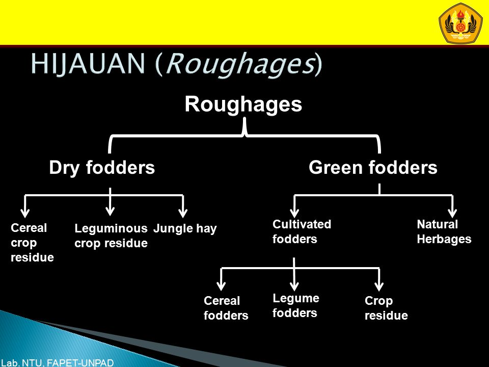 HIJAUAN (Roughages) Roughages Dry fodders Green fodders