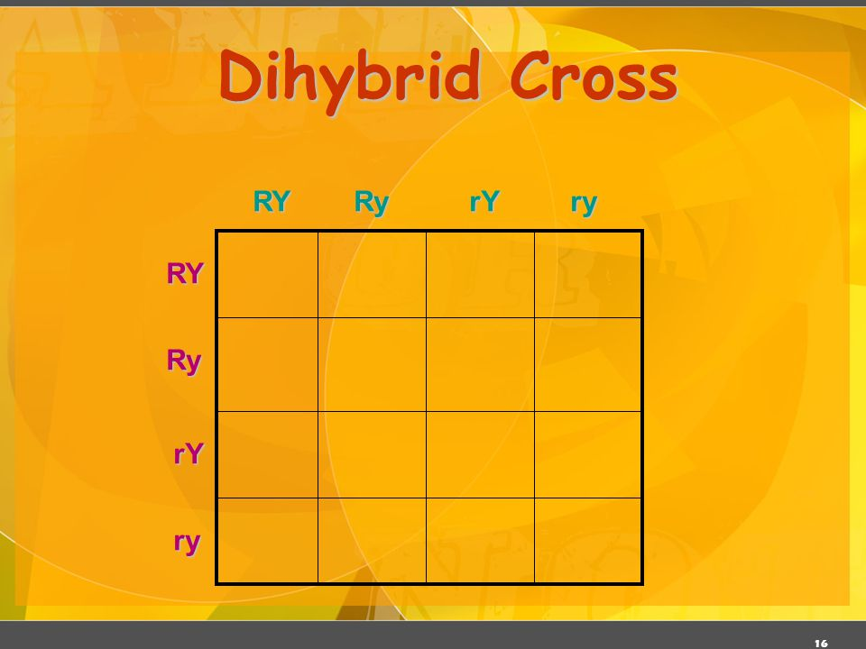 Dihybrid Cross RY Ry rY ry RY Ry rY ry