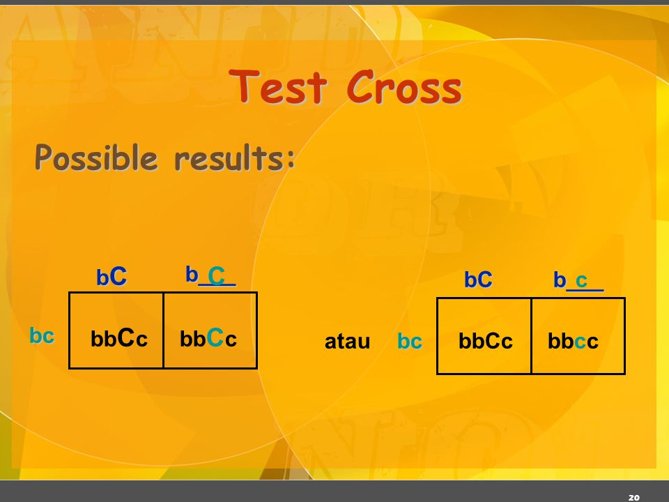 Test Cross Possible results: C bC b___ bc bbCc bC b___ bc bbCc bbcc